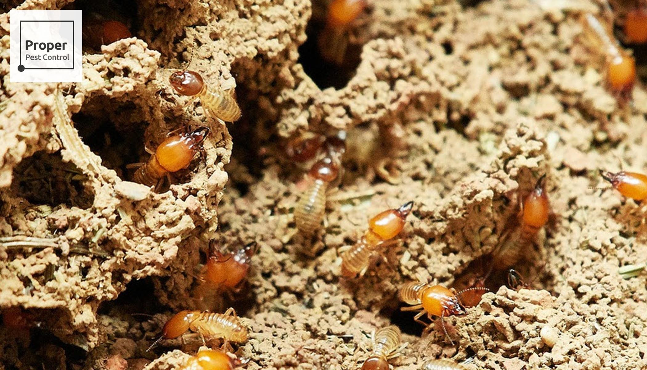 Proper Pest Control (@properpestcontrol) Cover Image