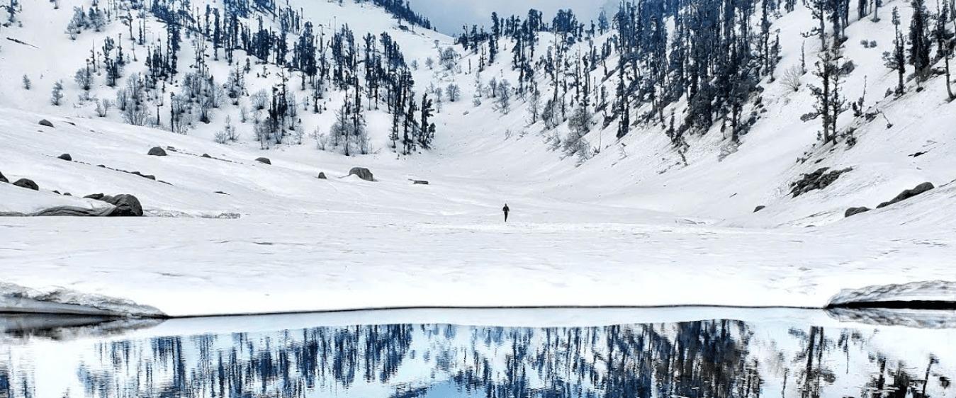 Snow Foxs (@snowfoxs) Cover Image