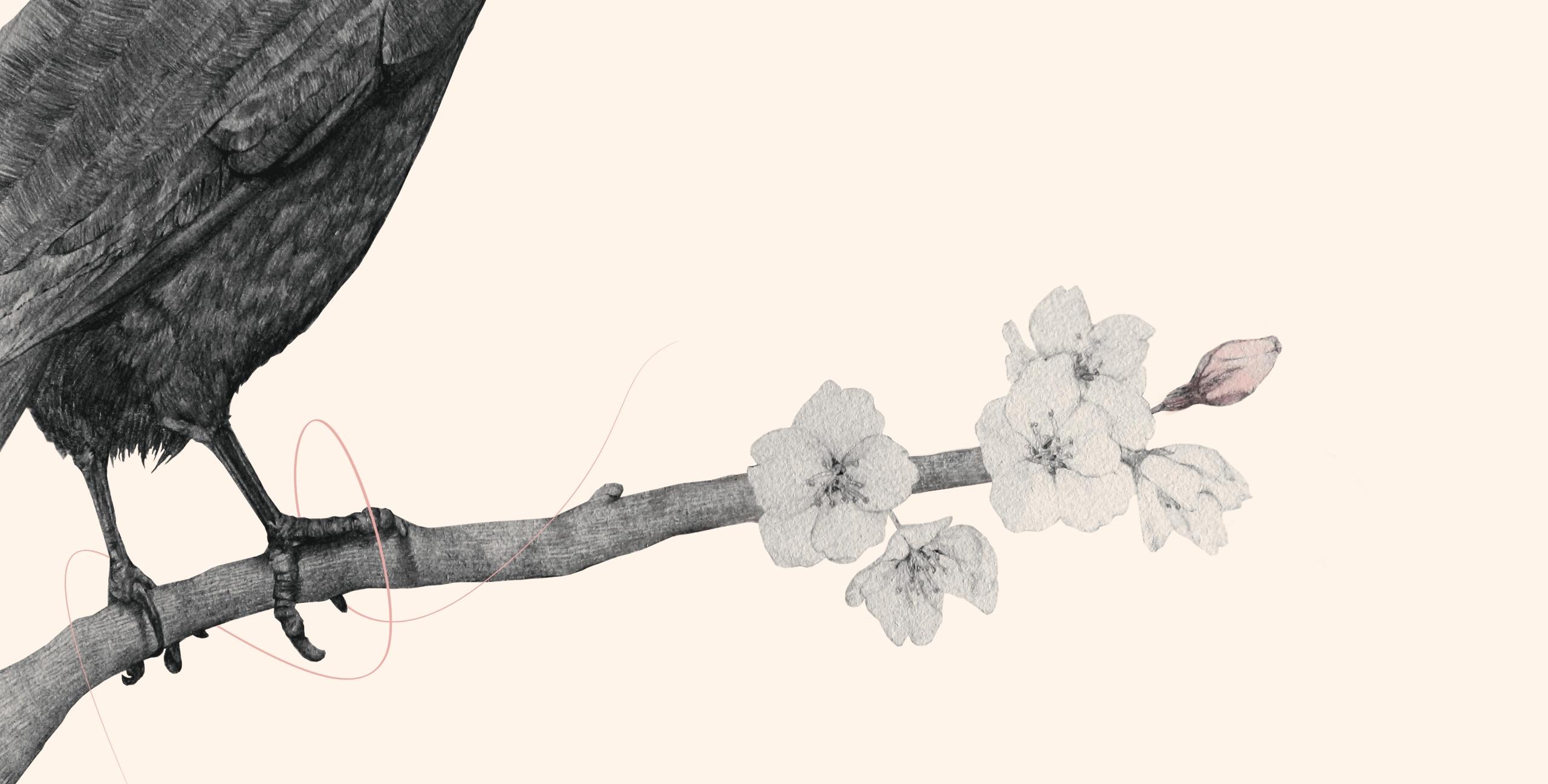 Shao Ni (@shaoni_art) Cover Image