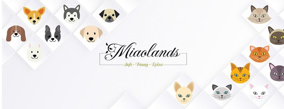 Miaolands (@miaolands) Cover Image