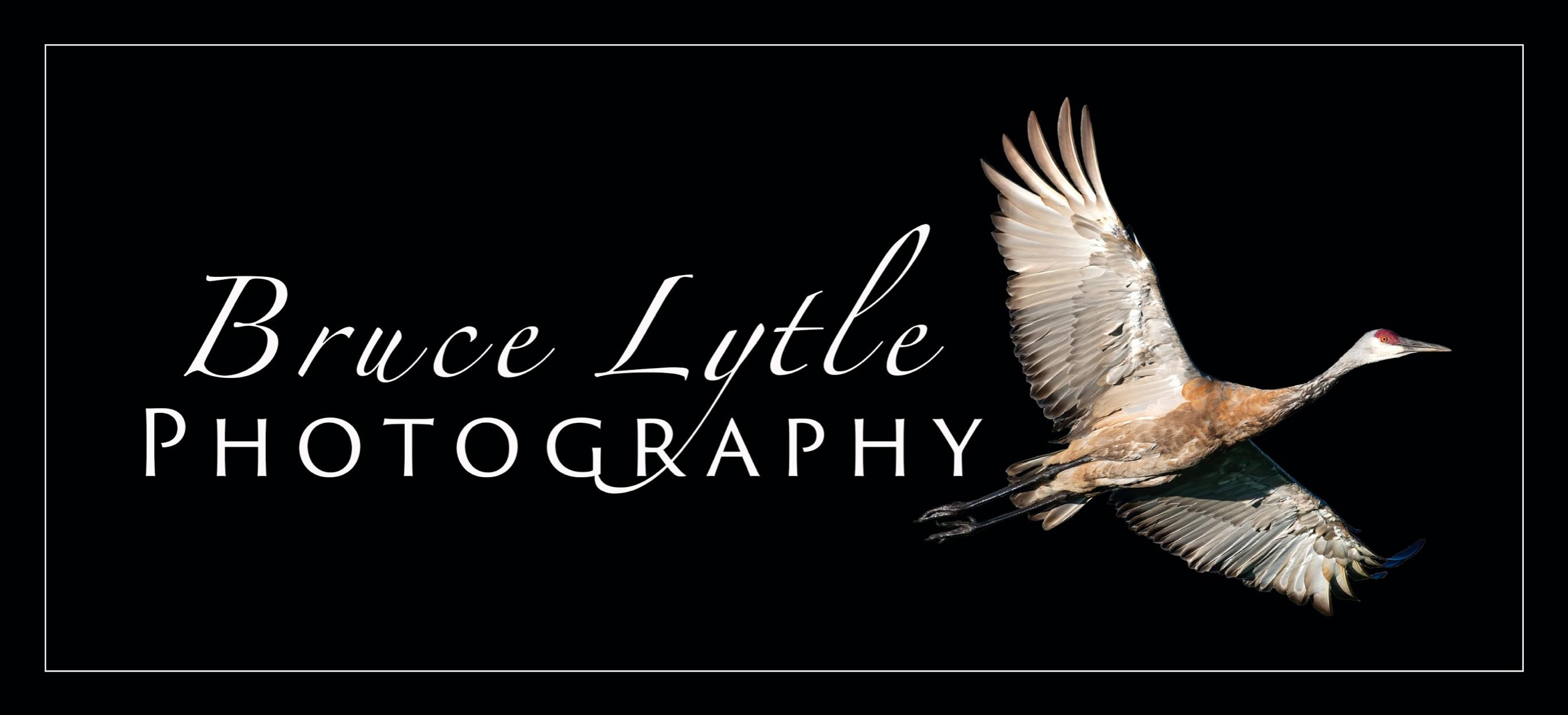lytlep (@lytlephoto) Cover Image