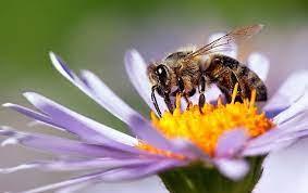 Bee Control Adelaide (@adelaidebeecontrol) Cover Image