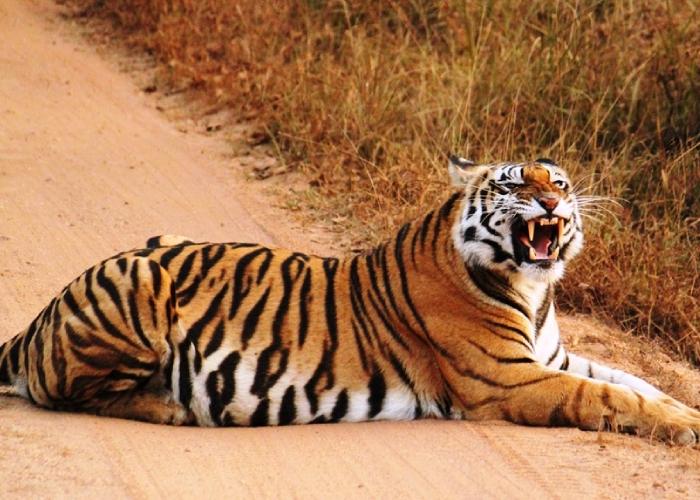 Saccharum Safari (@saccharumsafari) Cover Image