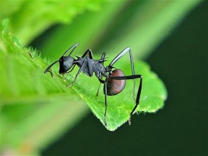RISE Pest Control Indianapolis (@risepestcontrolin) Cover Image