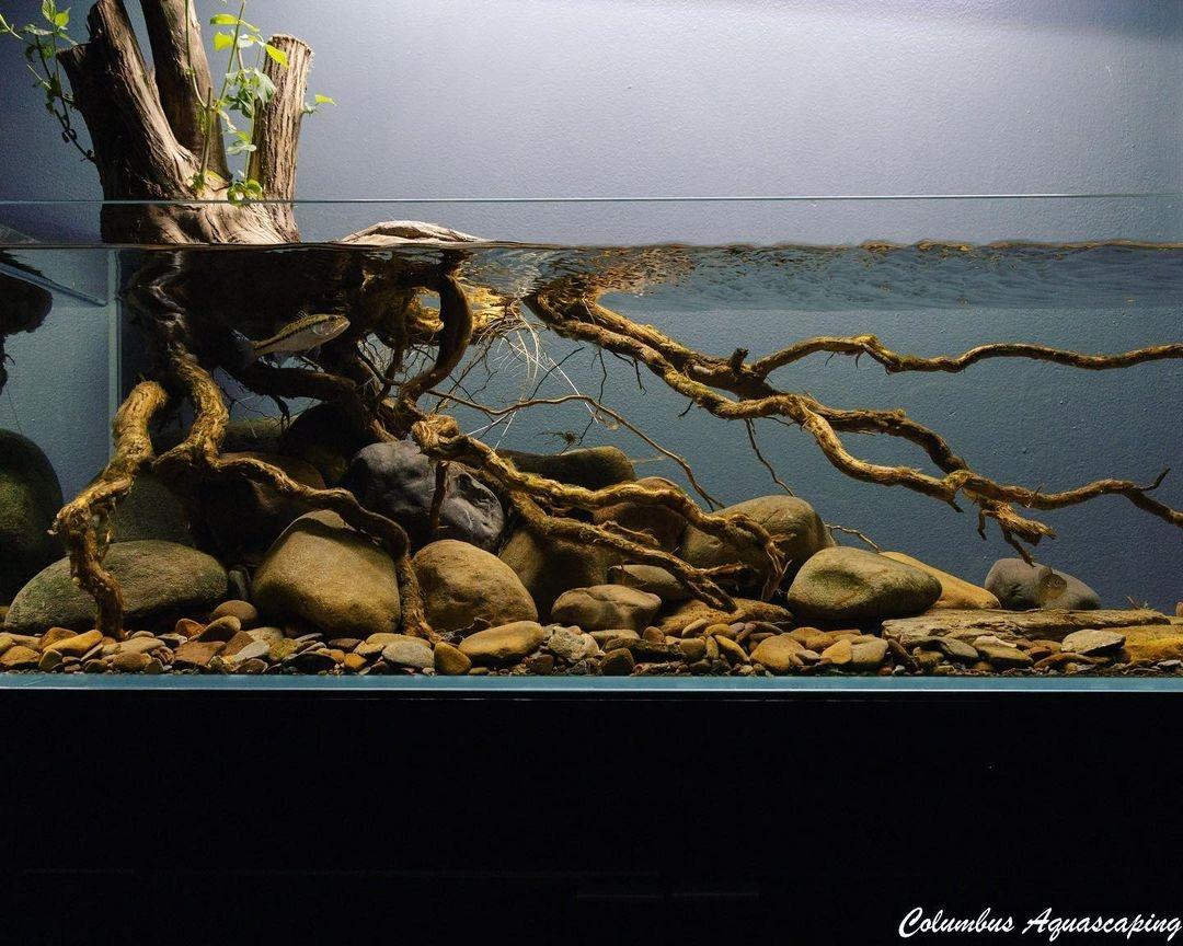 Aquascaper (@aquascaperorg) Cover Image
