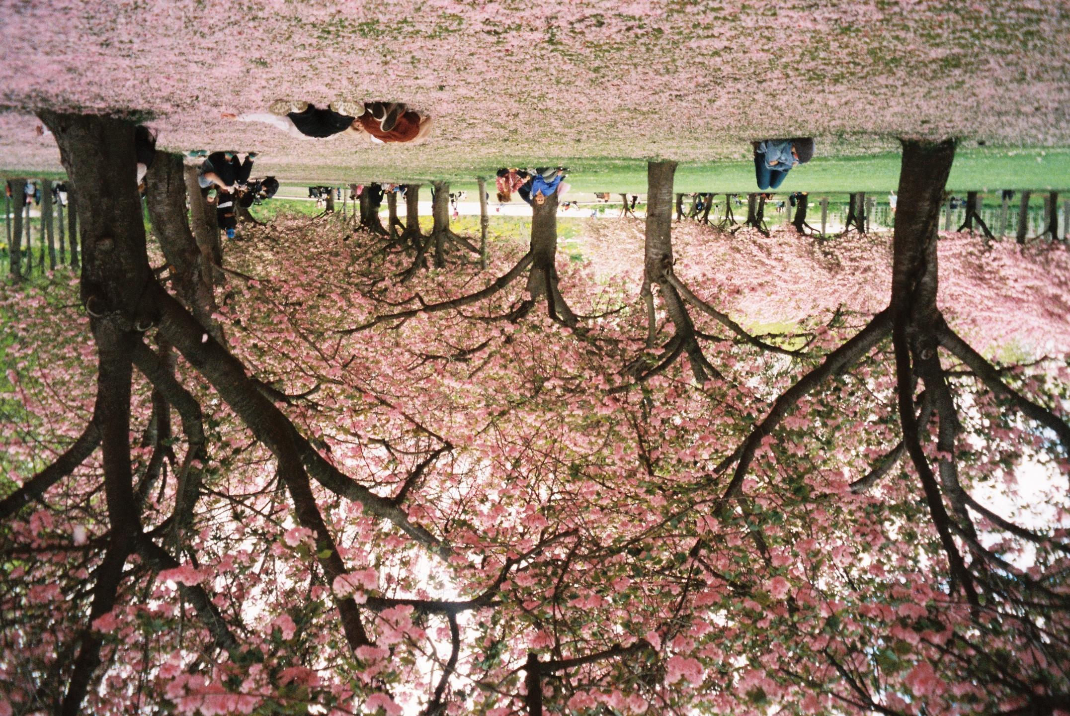 Sakura (@404sakura) Cover Image