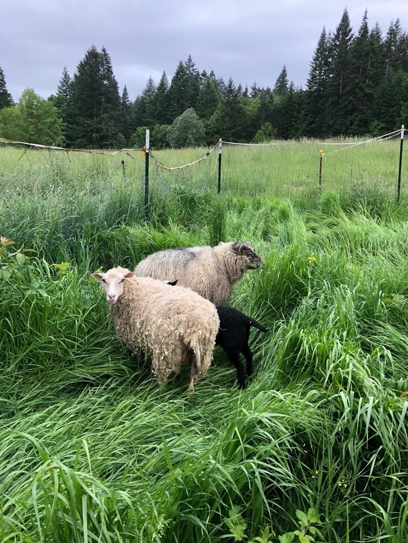 Q Family Farm (@qfamilyfarm) Cover Image