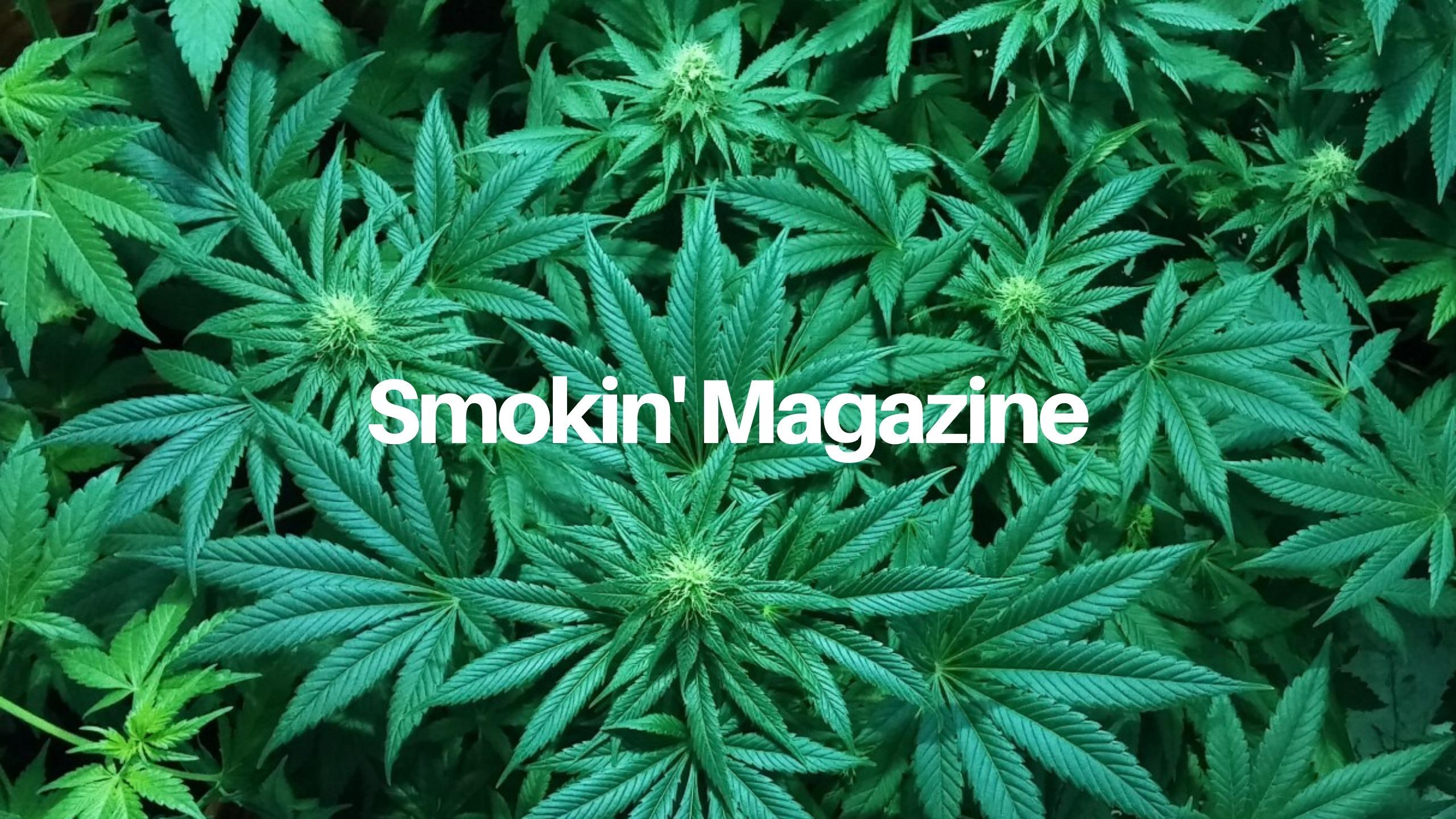 Smokin' Magazine (@smokinmagazine) Cover Image